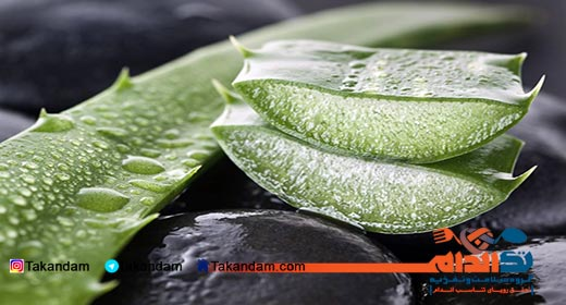 aloe-vera-benefits-psoriasis