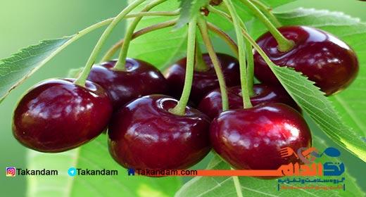 gout-cherry