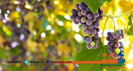 grape-diet-2