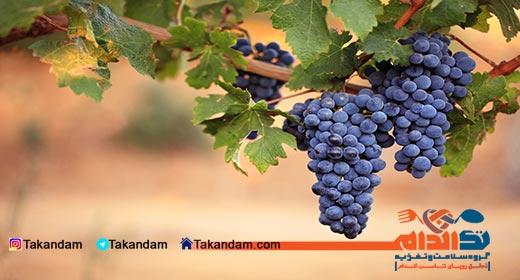 grape-diet-3