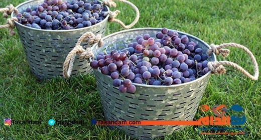 grape-diet-5