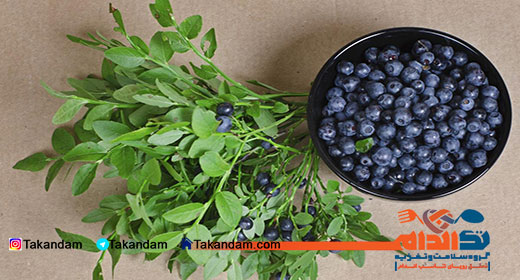 herbal-tea-and-weight-loss-bilberry